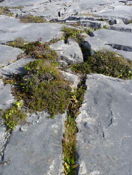 Aran Islands, Inishmaan, characteristic rocky landscape.