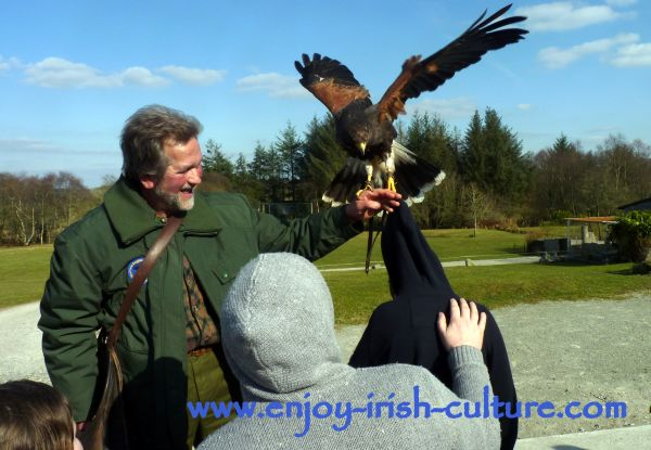 Lothar holds a hawk while chatting to visitors.