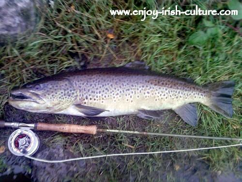 A fine cock trout from Lough Corrib, County Galway, Ireland.