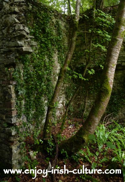 Trees growing in the ruin of the big house at Moore Hall, County Mayo, Ireland, a house closely connected with Irish history.