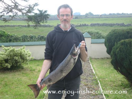 Salmon caught in County Mayo, Ireland off the river bank.