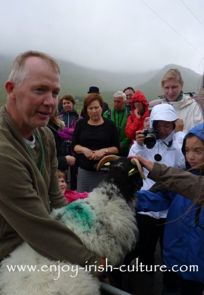 The kids in the audience get a chance to pet the sheep at Joe Joyce's sheepdog show in Joyce Country, County Galway, Ireland.