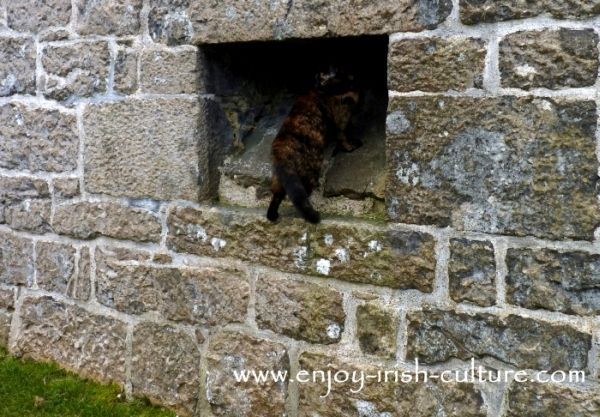 The hole in the wall where toilet waste from the garderobes once emerged, Annaghdown Castle, County Galway, Ireland.