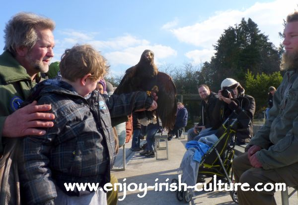 During the raptor show Gerry the Harris hawk has just landed on our boys' arm. He was left speechless!