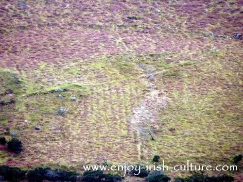 Traces of famine ridges on a steep hillside in County Mayo, Ireland.